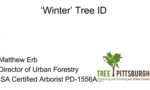 Winter Tree ID by Mathew Erb
