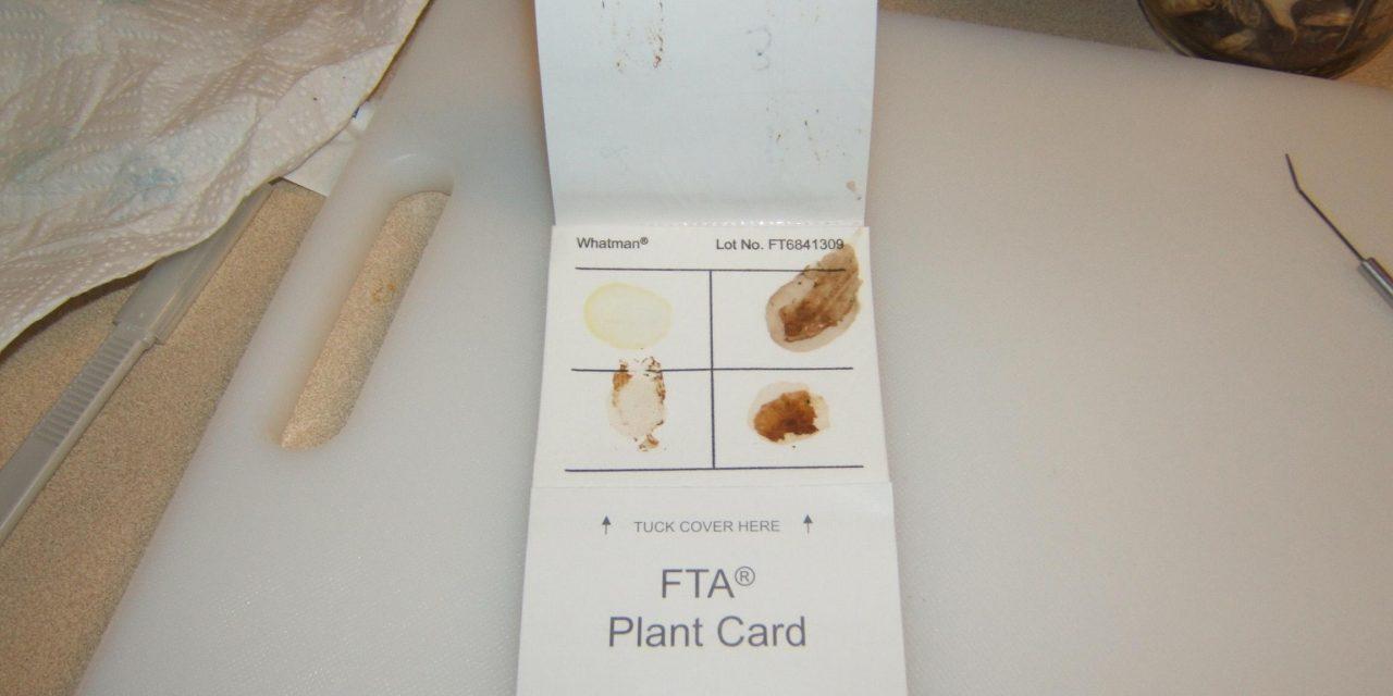 DNA barcoding sample preparation