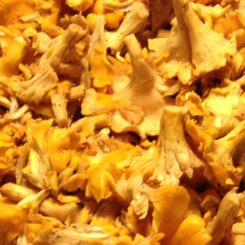 Chanterelle preservation methods