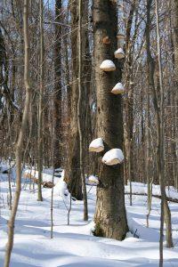 Bill Greenwalt - Sno Cone Tree