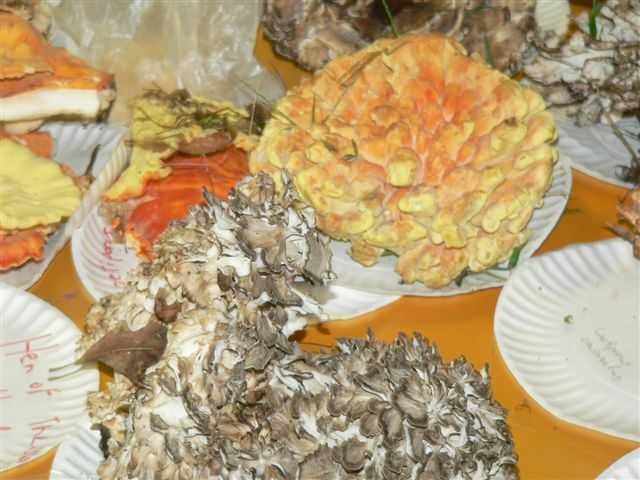Mushroom Mania 2006