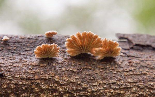 Winter mushrooms