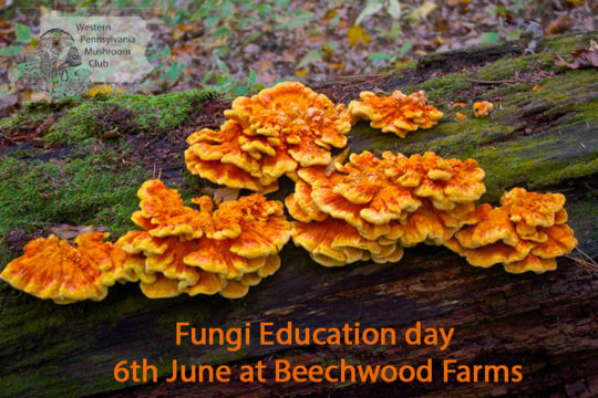 Fungi Education Day registration open