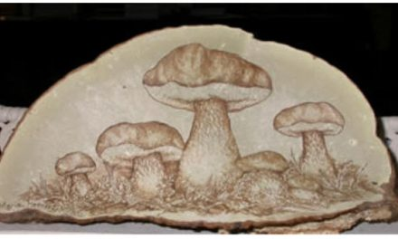 Introduction to Polypores