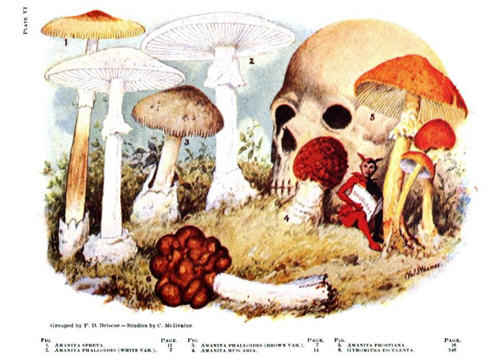 Old mushrooms texts availablefor free on the internet.