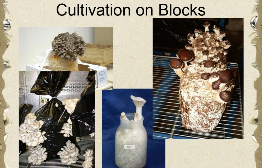 Mushroom Cultivation For Food and Medicine