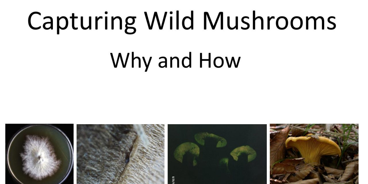 Capturing Wild Mushrooms