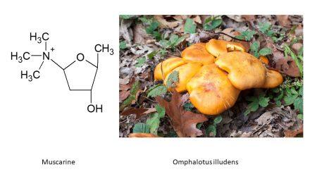 Mushroom toxicity