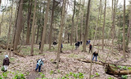 Species list from Erie Bluffs State Park on 05/07/2019