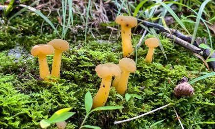 Species list from Hike with a Naturalist: Fantastic Fungi on 07/14/2019