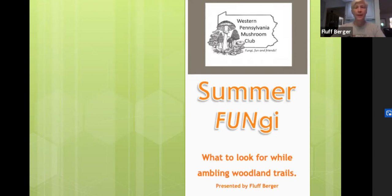 June meeting online – Looking for Summer FUNgi