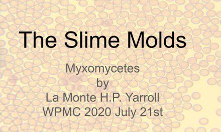 Slime Molds by La Monte Yarroll