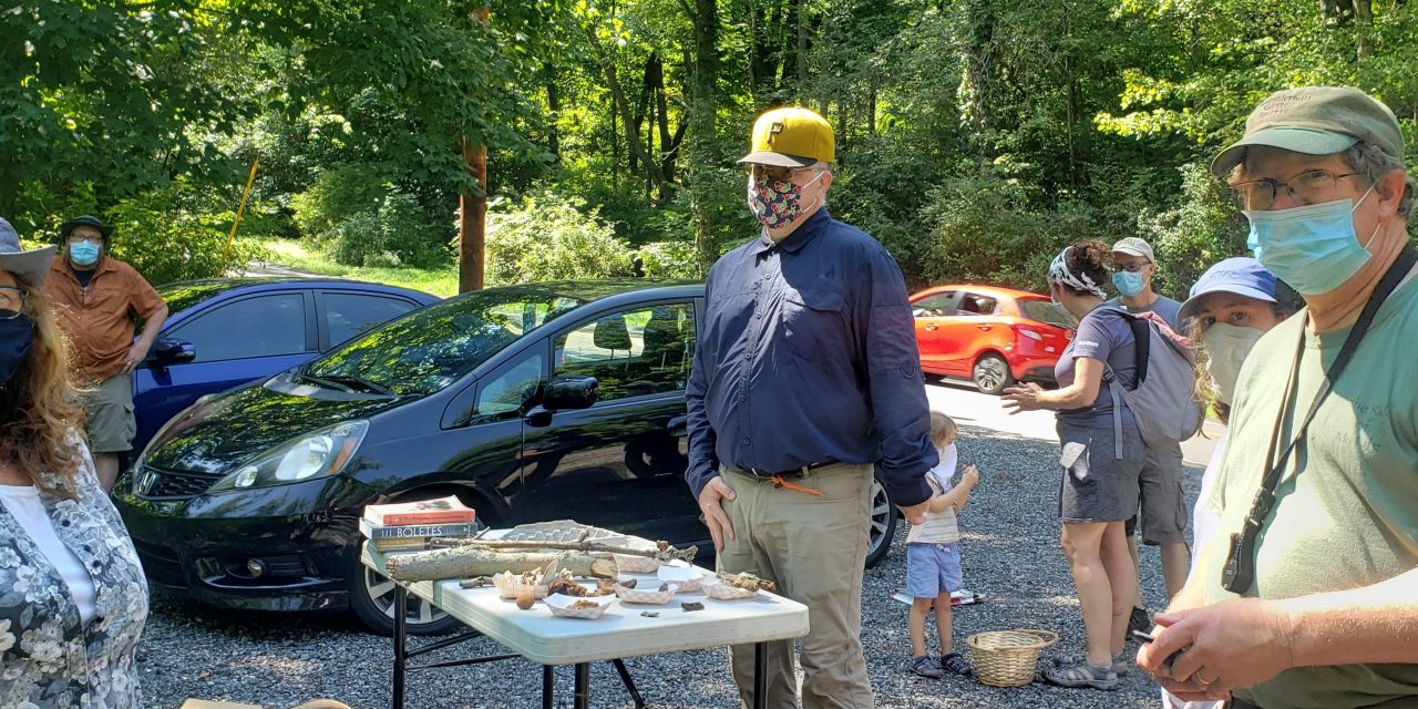 Species list from Linbrook Woodlands (Sewickley) with Allegheny Land Trust on 07/25/2020
