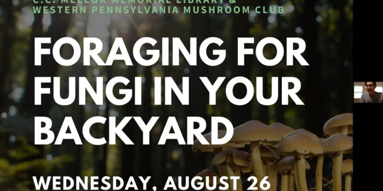 Foraging for Fungi in Your Backyard