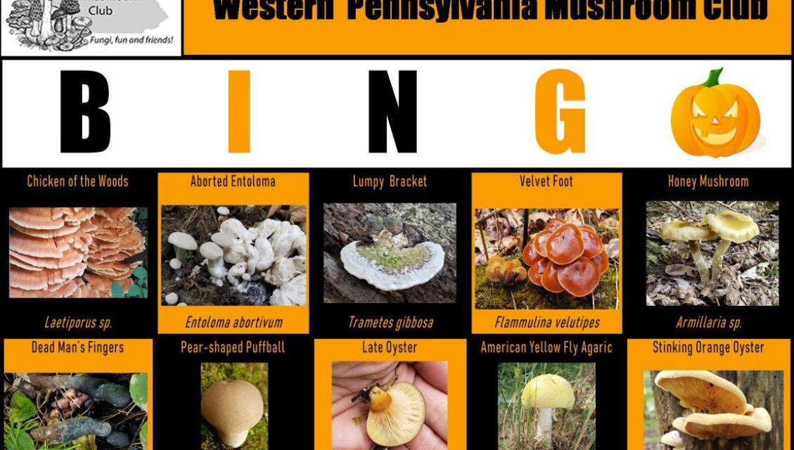 WPMC Fall Mushroom BINGO 2020 Runs through November