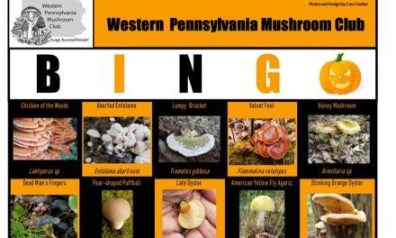 Fall Bingo has started!