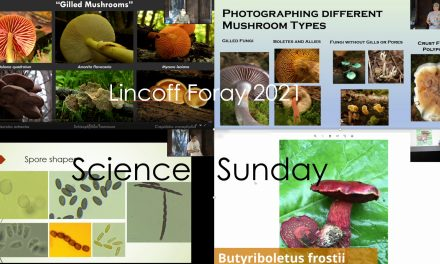 Lincoff foray presentations and Science Sunday